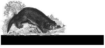 Dierenkliniek Den Otter