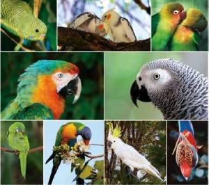 vogels1